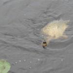 vissen in de vecht
